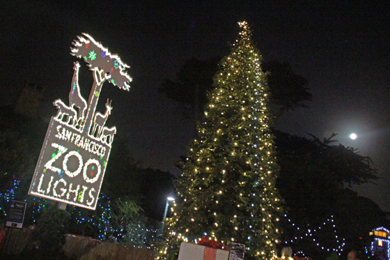 San Francisco Zoo Lights Pop Up « San Francisco Bazaar